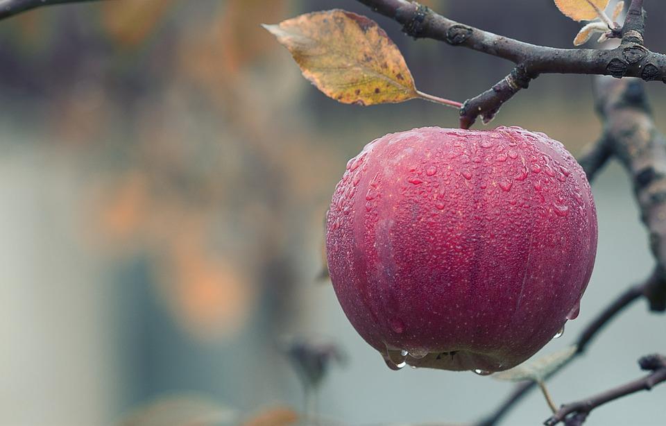 Pour cet hiver, profitez des 5 bienfaits de la pomme !