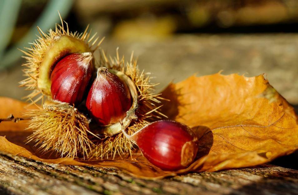 La châtaigne, un fruit aux vertus insoupçonnées