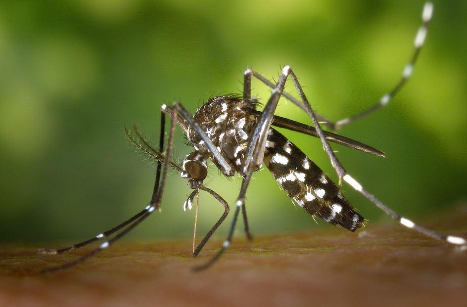 Les complications d'une piqûre d'insecte