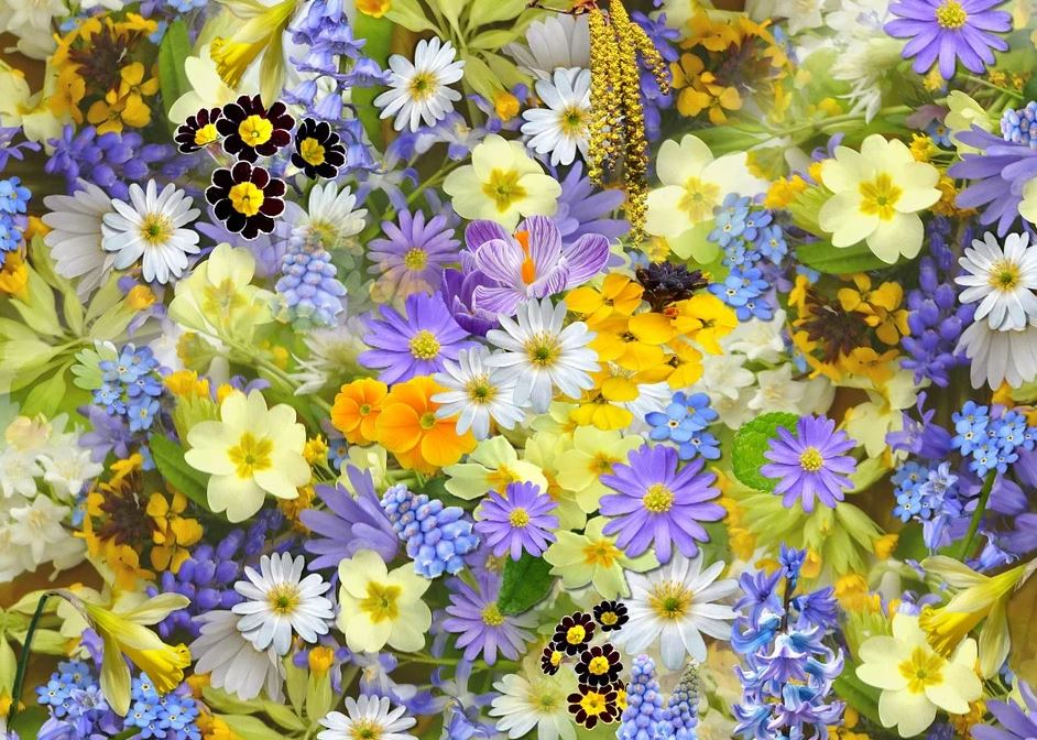 Les vertus des plantes et des fleurs
