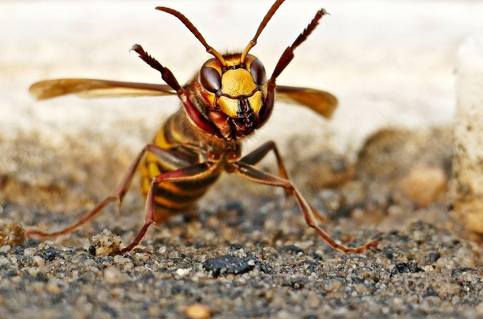 Reconnaître les piqûres d'insectes